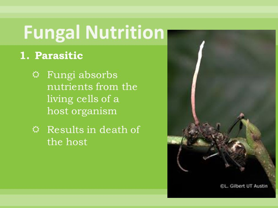 Fungal Nutrition Parasitic
