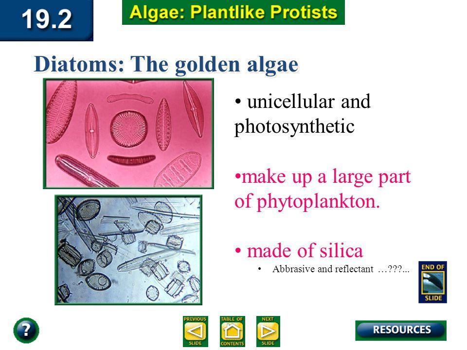 Diatoms: The golden algae