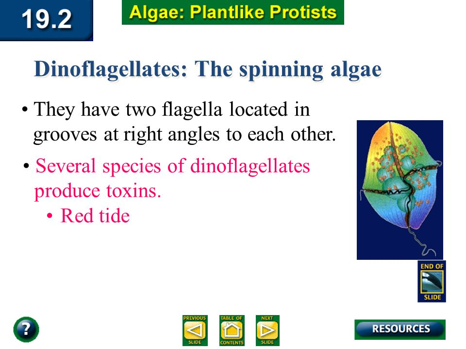 Dinoflagellates: The spinning algae