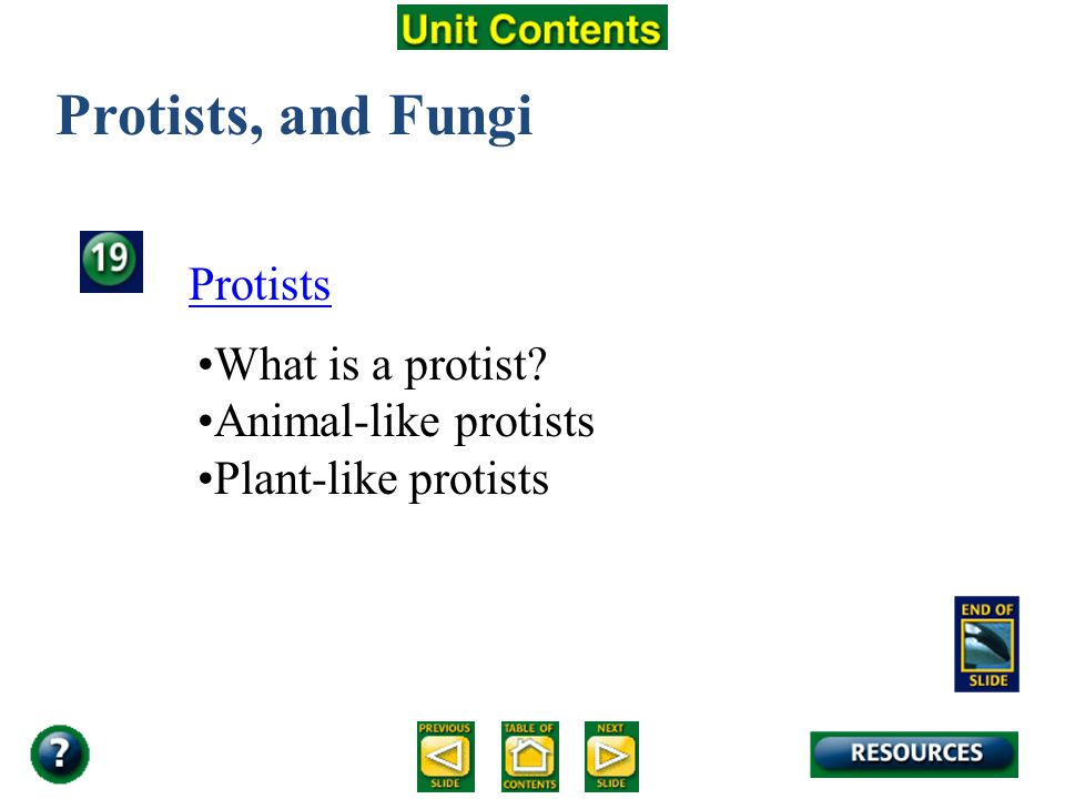 Protists, and Fungi Protists What is a protist Animal-like protists