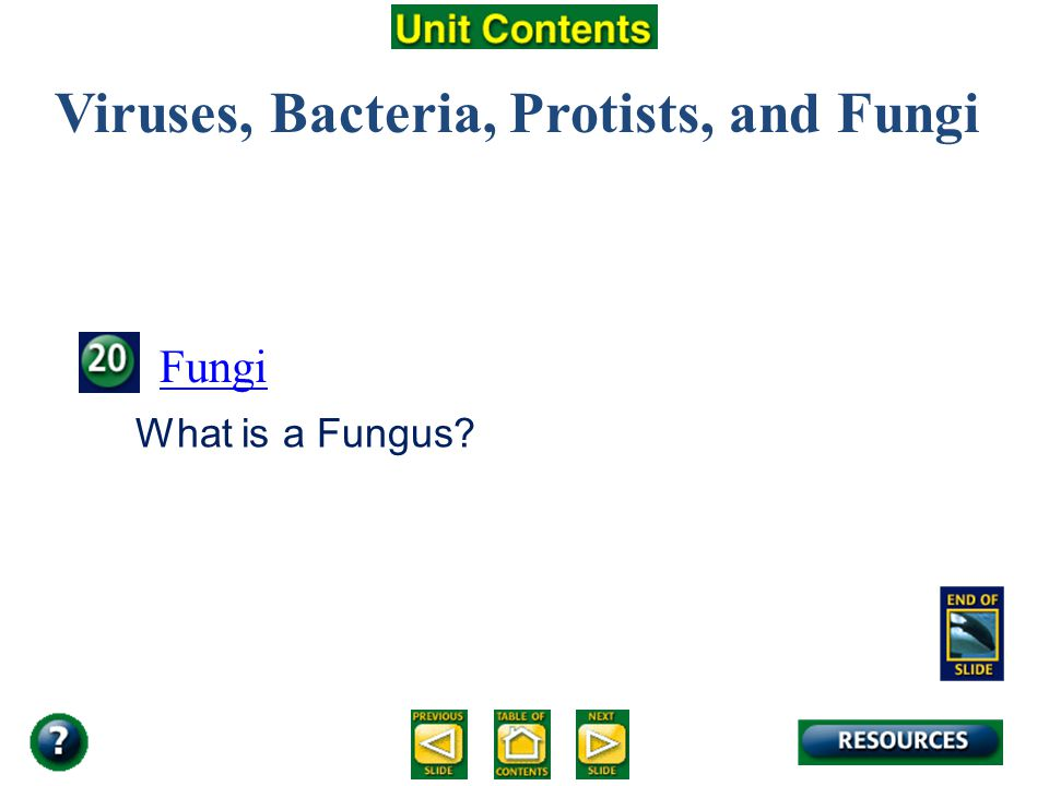 Viruses, Bacteria, Protists, and Fungi