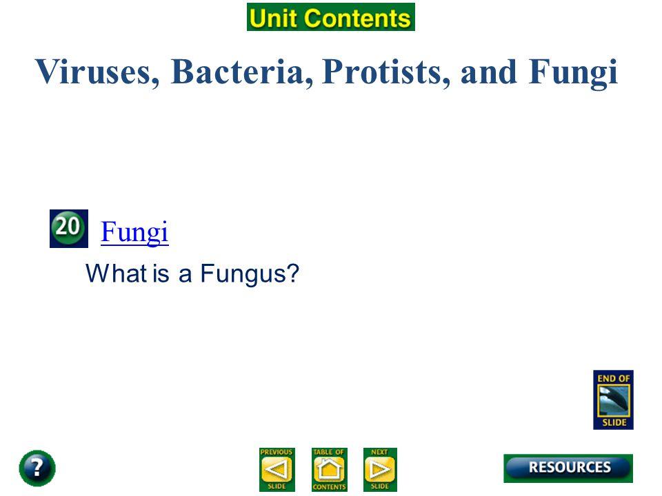 Viruses, Bacteria, Protists, and Fungi