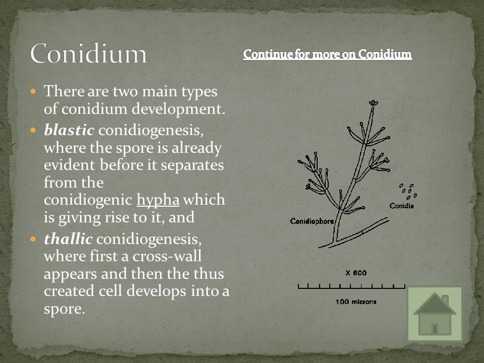 Continue for more on Conidium