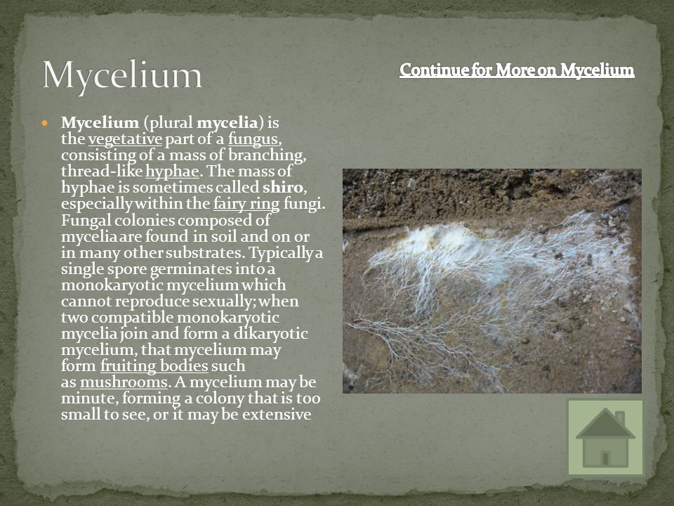 Continue for More on Mycelium