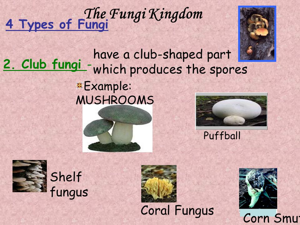 The Fungi Kingdom 4 Types of Fungi