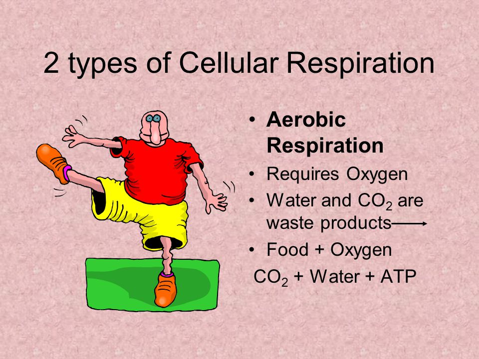 2 types of Cellular Respiration