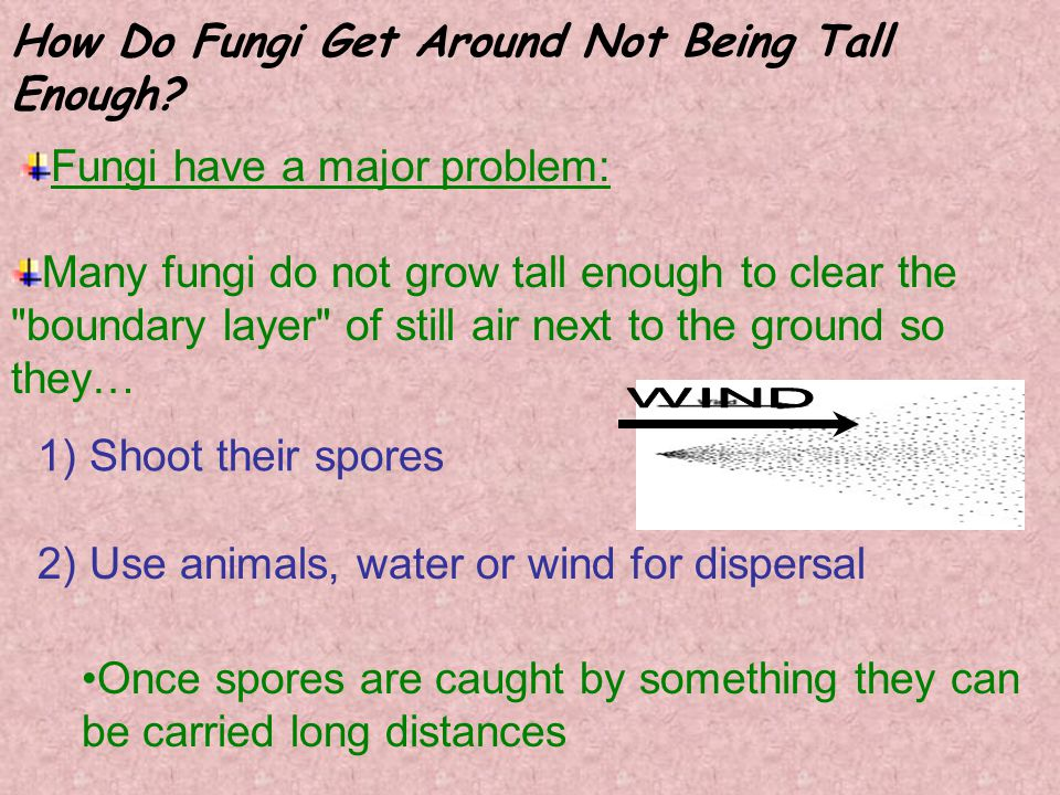 How Do Fungi Get Around Not Being Tall Enough