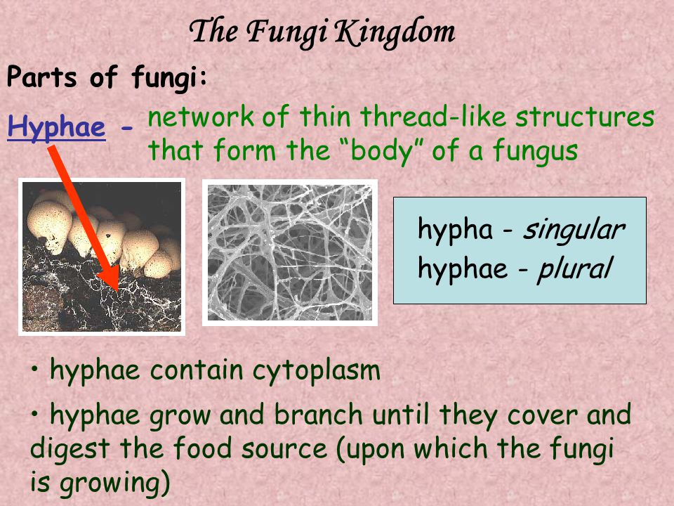 The Fungi Kingdom Parts of fungi: