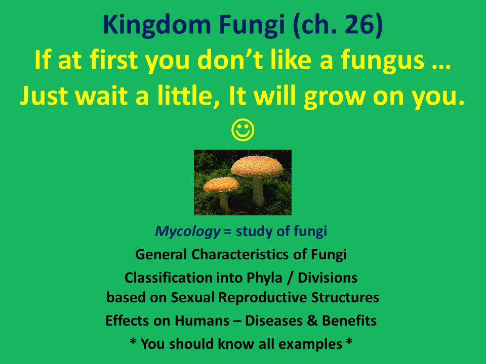 Kingdom Fungi (ch. 26) If at first you don't like a fungus … Just wait a little, It will grow on you. 
