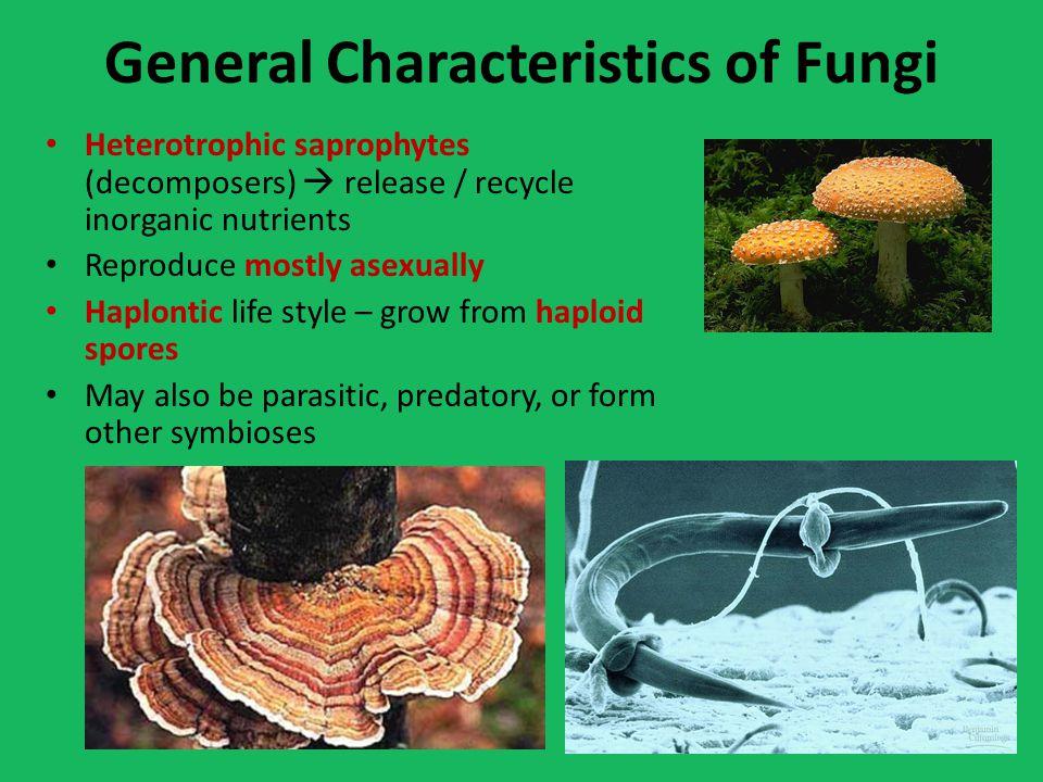 General Characteristics of Fungi