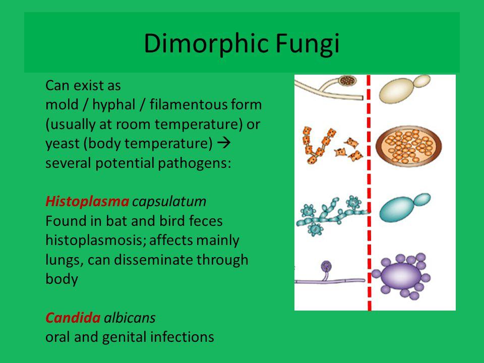 Dimorphic Fungi 25 C 37 C Can exist as