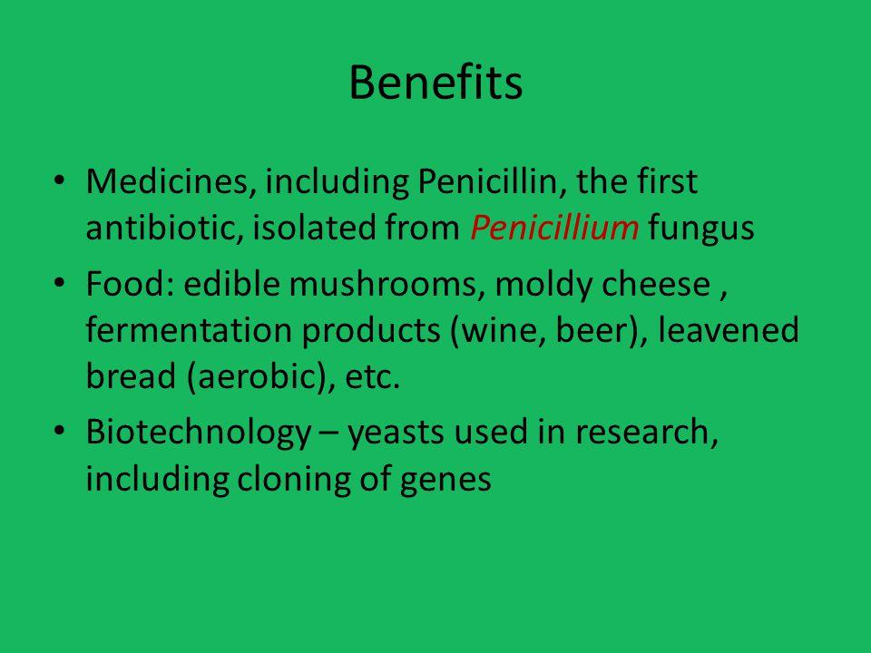 Benefits Medicines, including Penicillin, the first antibiotic, isolated from Penicillium fungus.