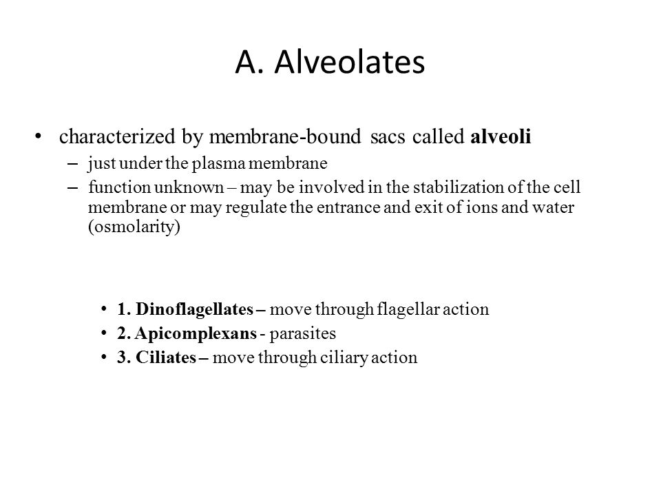 A. Alveolates characterized by membrane-bound sacs called alveoli