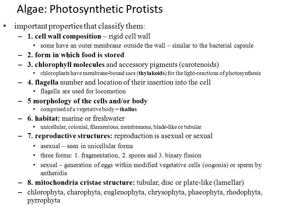 Algae: Photosynthetic Protists
