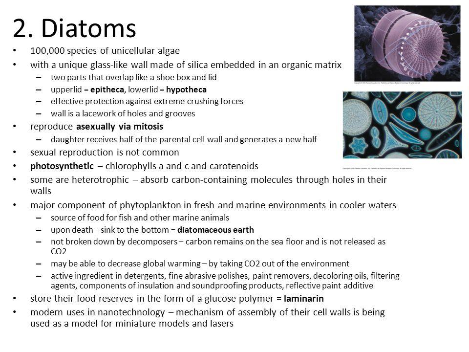 2. Diatoms 100,000 species of unicellular algae