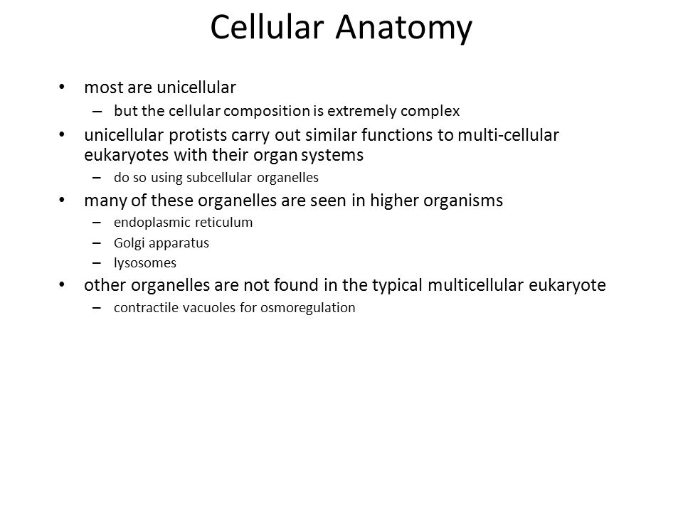 Cellular Anatomy most are unicellular