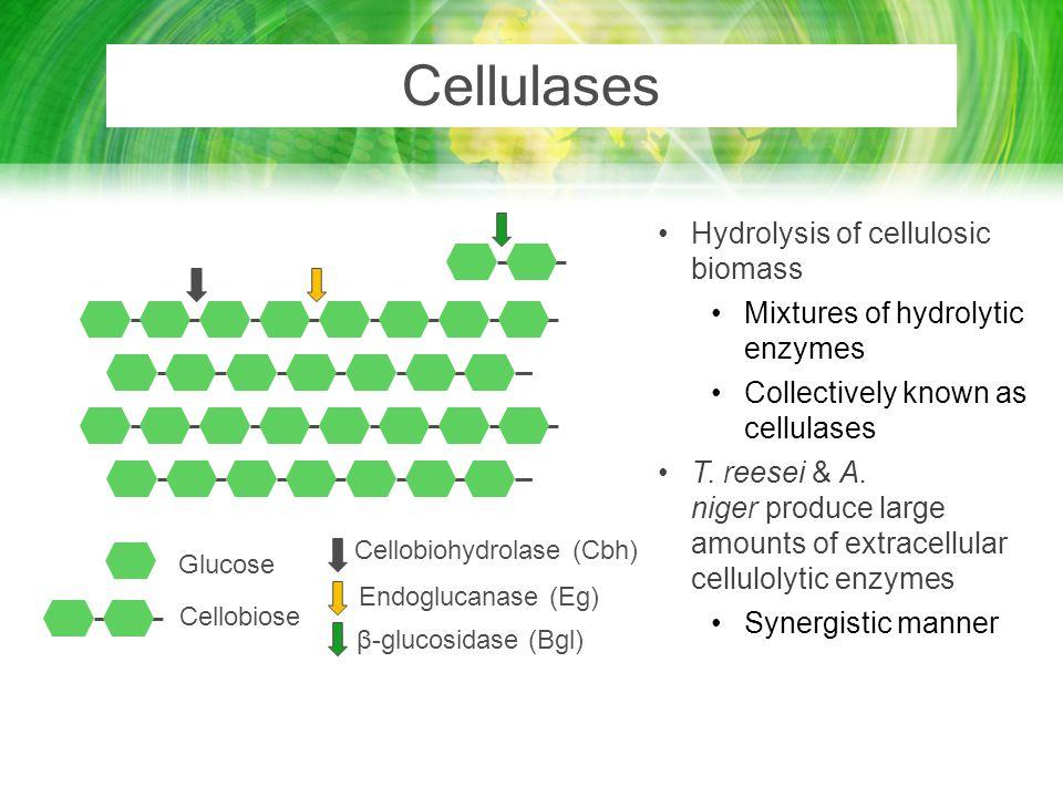 Cellobiohydrolase (Cbh)