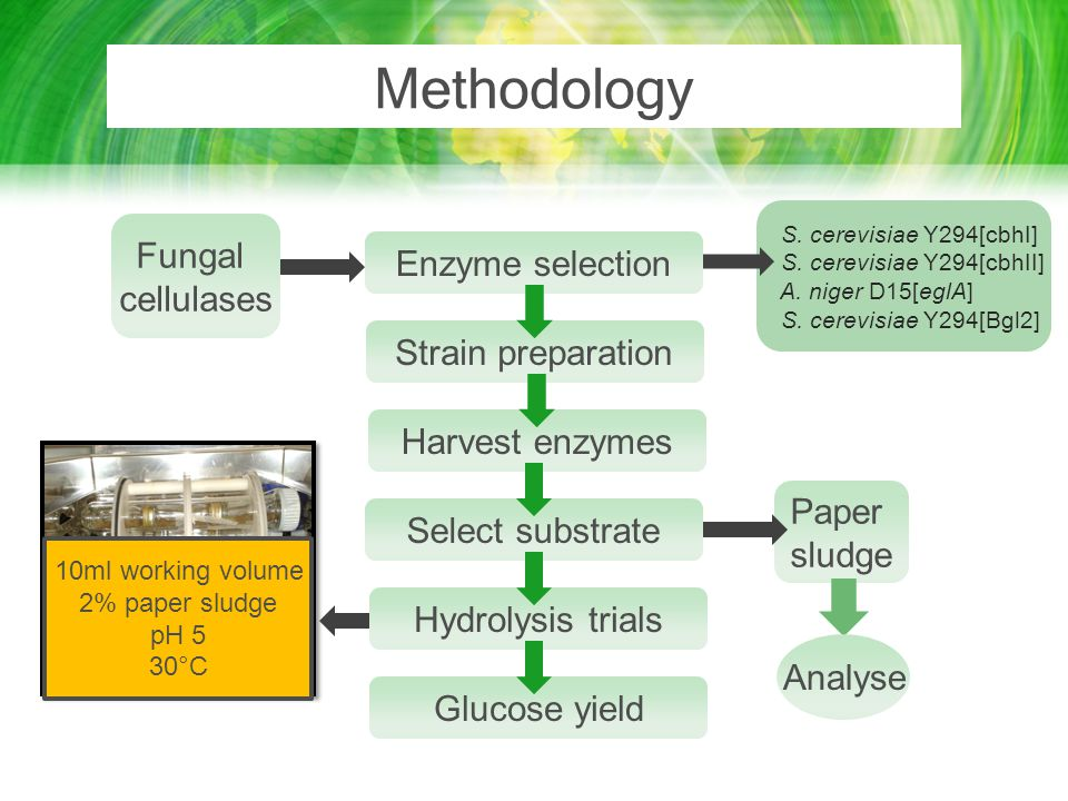 Methodology Fungal Enzyme selection cellulases Strain preparation
