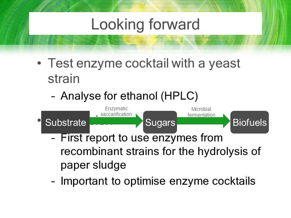 Looking forward Test enzyme cocktail with a yeast strain Conclusion