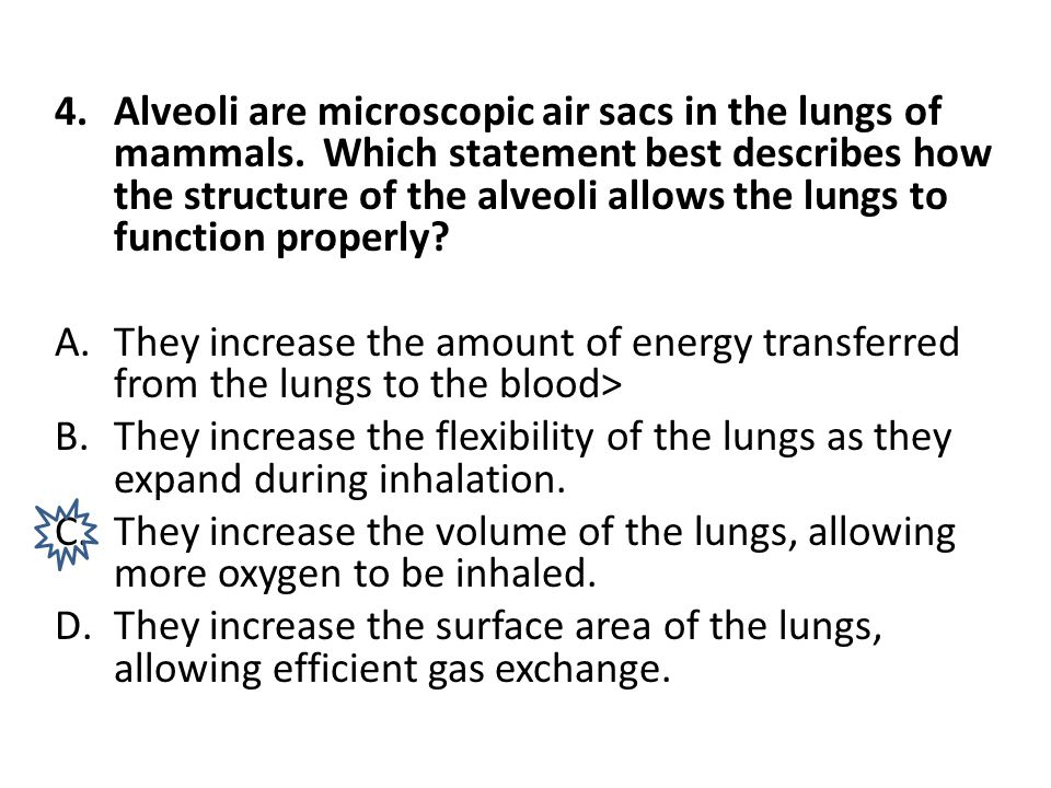 Alveoli are microscopic air sacs in the lungs of mammals