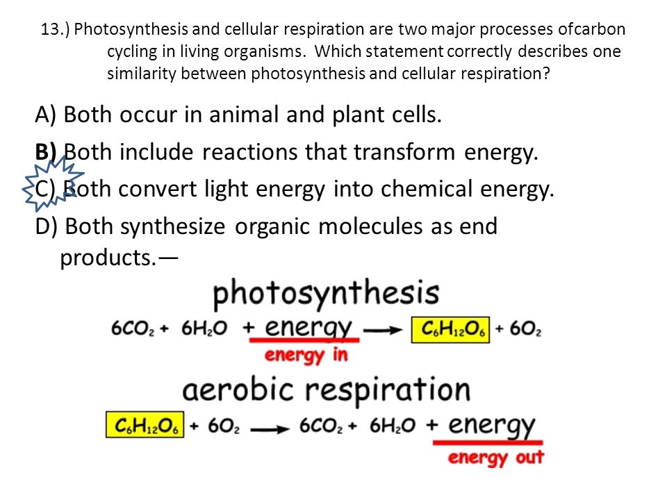13.) Photosynthesis and cellular respiration are two major processes of carbon cycling in living organisms. Which statement correctly describes one similarity between photosynthesis and cellular respiration