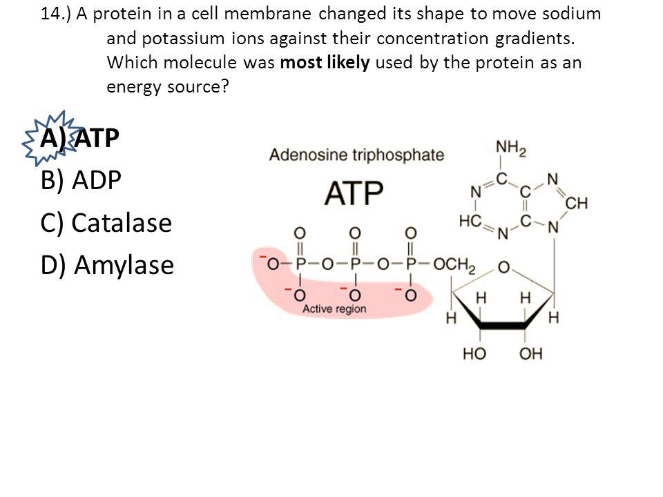 A) ATP B) ADP C) Catalase D) Amylase