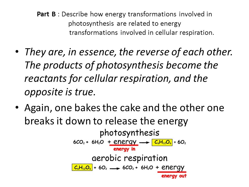Part B : Describe how energy transformations involved in photosynthesis are related to energy transformations involved in cellular respiration.