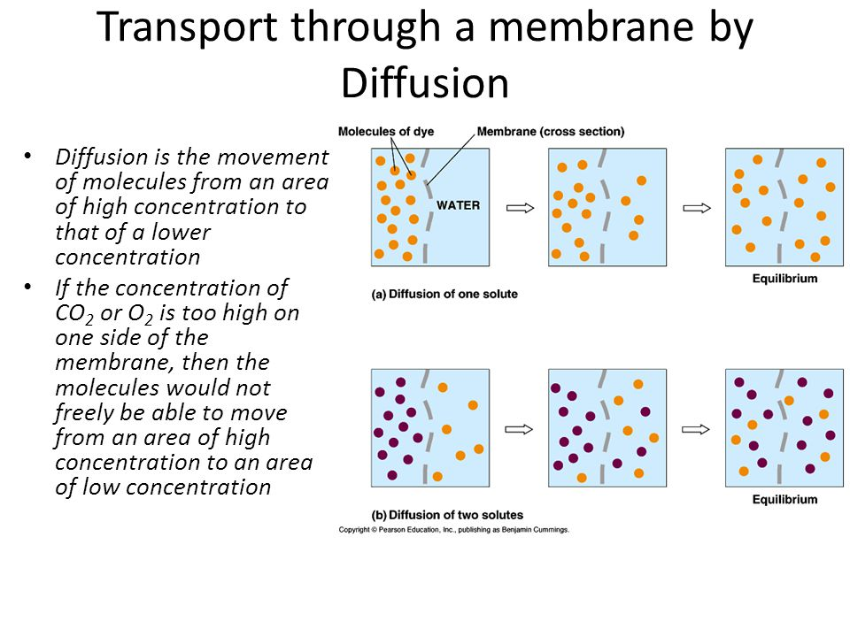 Transport through a membrane by Diffusion