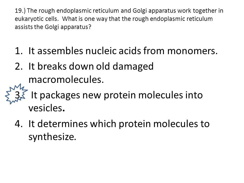 It assembles nucleic acids from monomers.