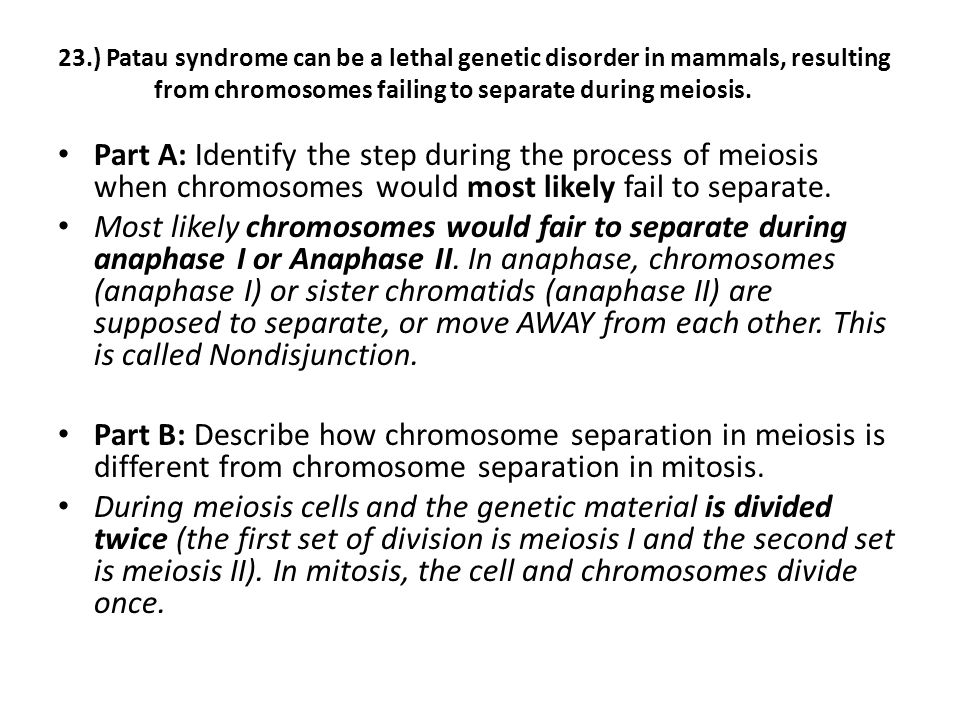 23.) Patau syndrome can be a lethal genetic disorder in mammals, resulting from chromosomes failing to separate during meiosis.