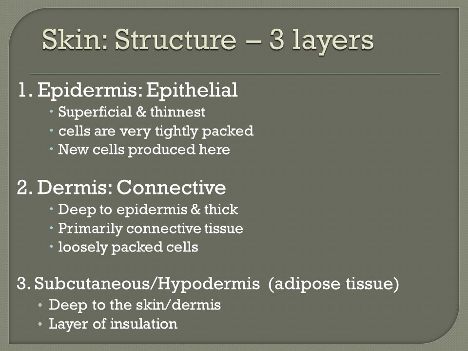Skin: Structure – 3 layers