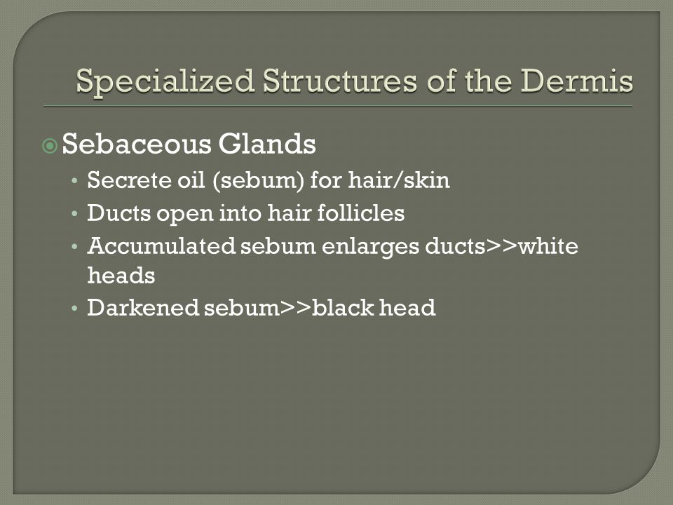 Specialized Structures of the Dermis