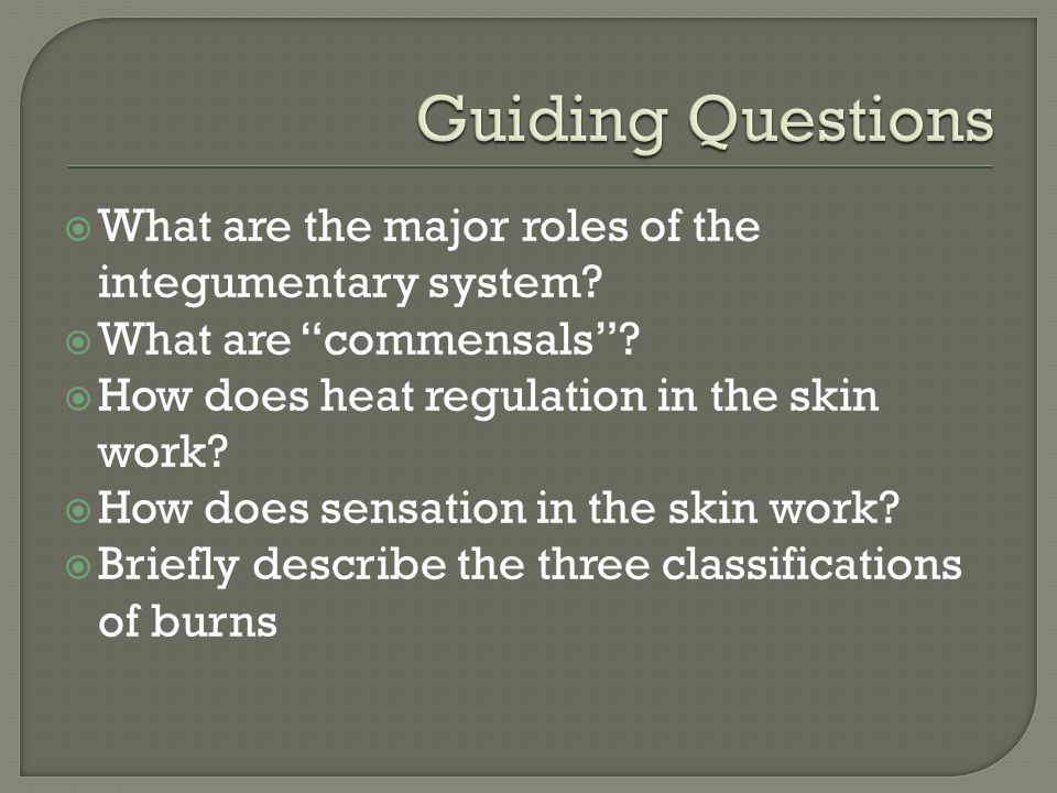Guiding Questions What are the major roles of the integumentary system What are commensals How does heat regulation in the skin work