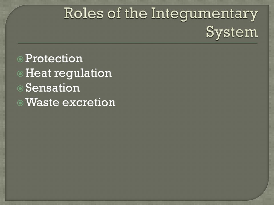Roles of the Integumentary System