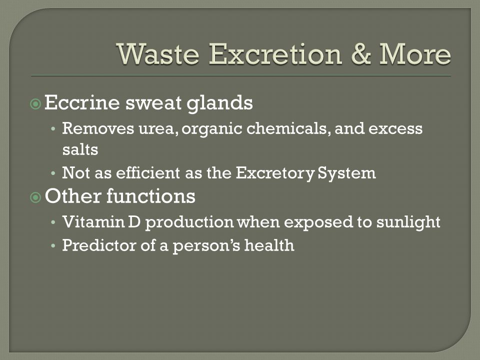 Waste Excretion & More Eccrine sweat glands Other functions