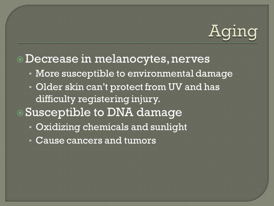 Aging Decrease in melanocytes, nerves Susceptible to DNA damage