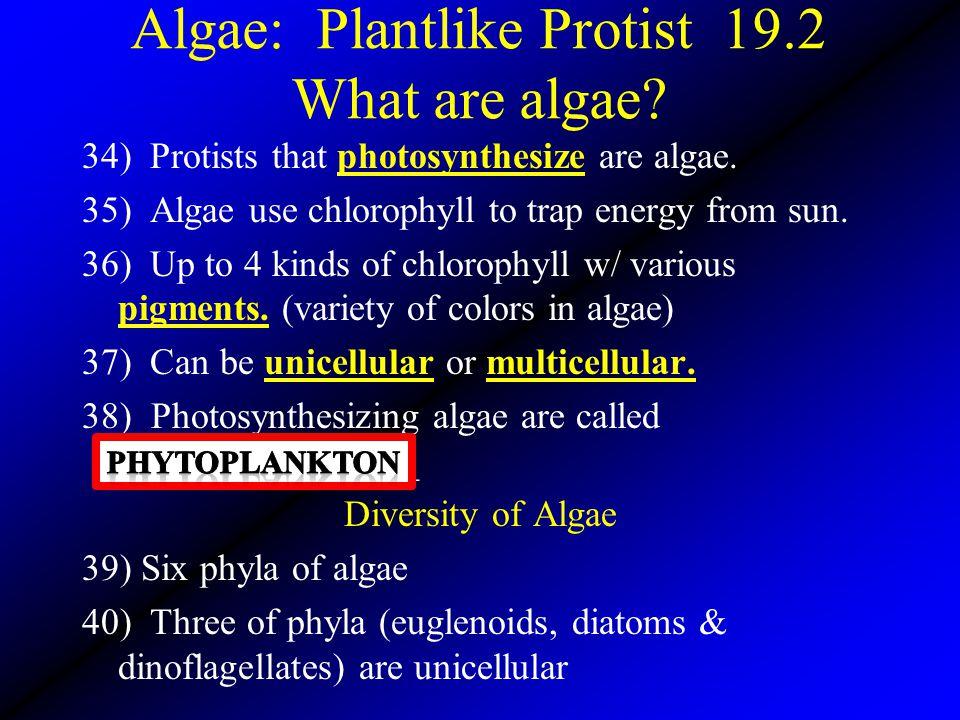 Algae: Plantlike Protist 19.2 What are algae