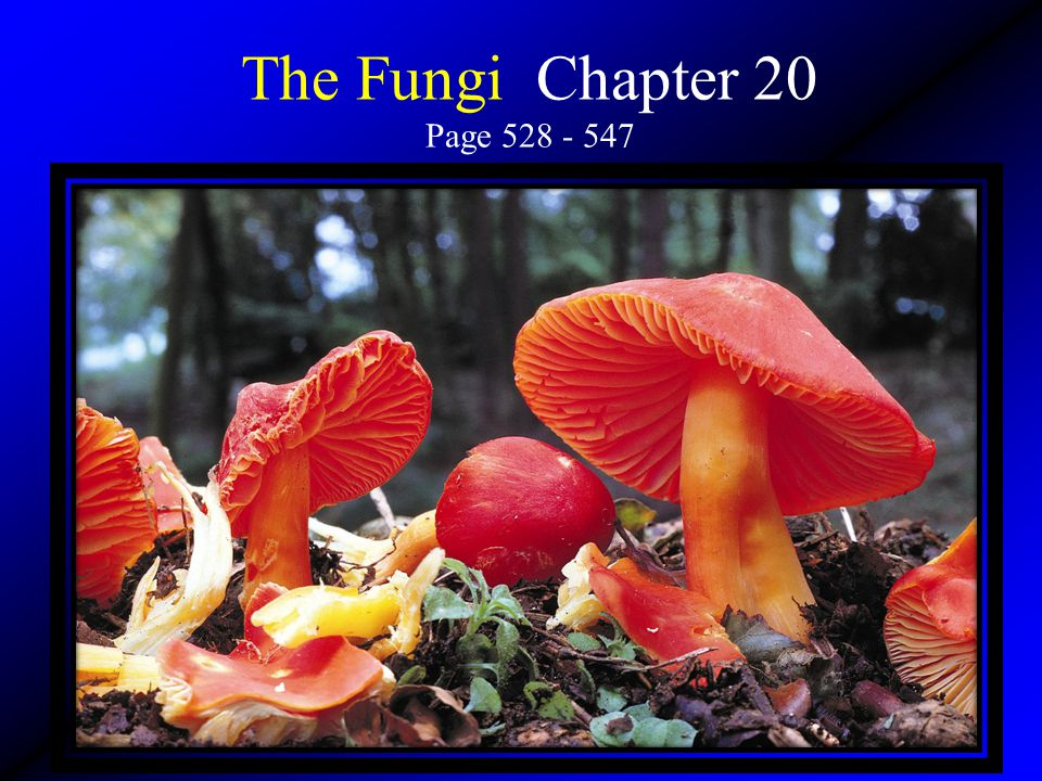 The Fungi Chapter 20 Page 528 - 547