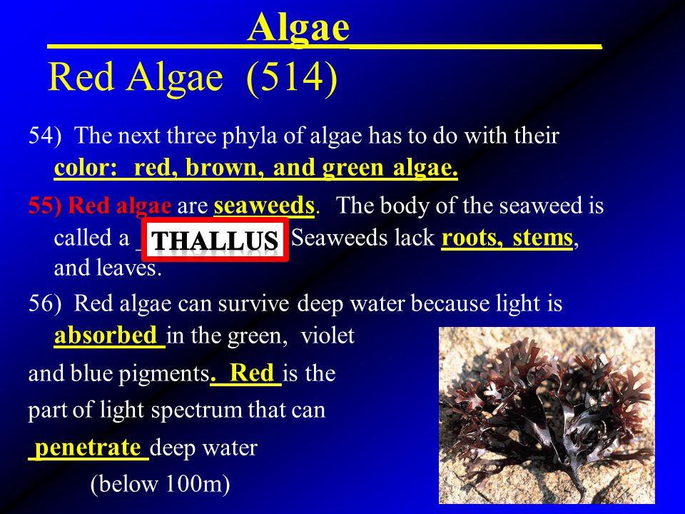 Algae____________ Red Algae (514)
