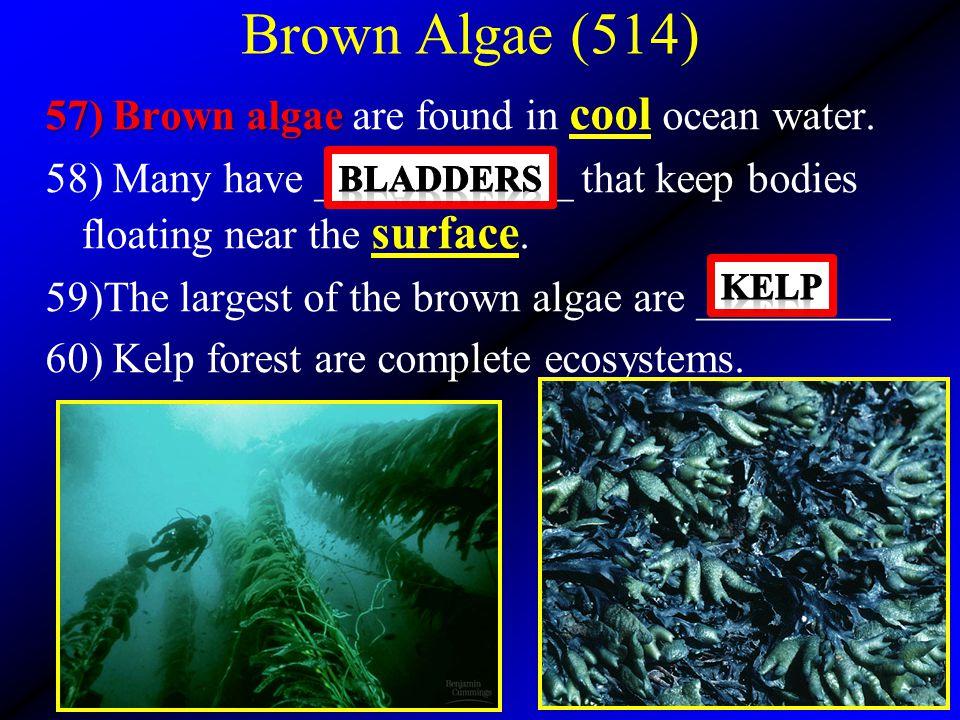 Brown Algae (514)