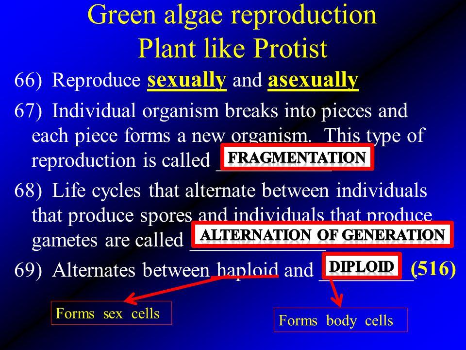Green algae reproduction Plant like Protist