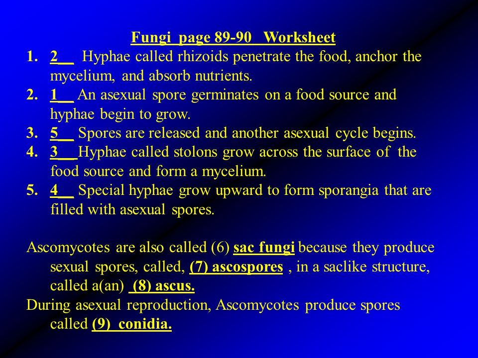 Fungi page 89-90 Worksheet 2__ Hyphae called rhizoids penetrate the food, anchor the mycelium, and absorb nutrients.
