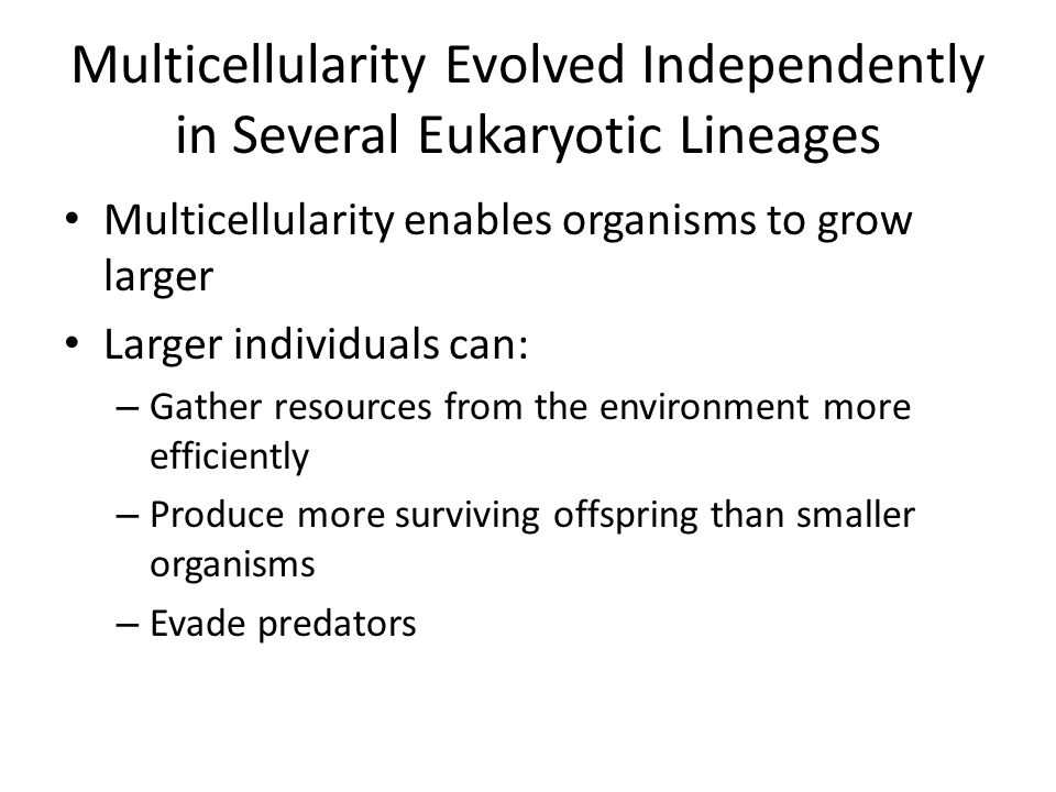 Multicellularity Evolved Independently in Several Eukaryotic Lineages