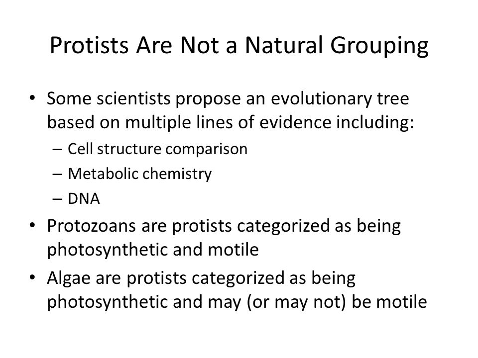 Protists Are Not a Natural Grouping