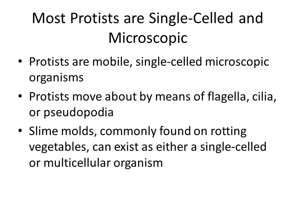 Most Protists are Single-Celled and Microscopic