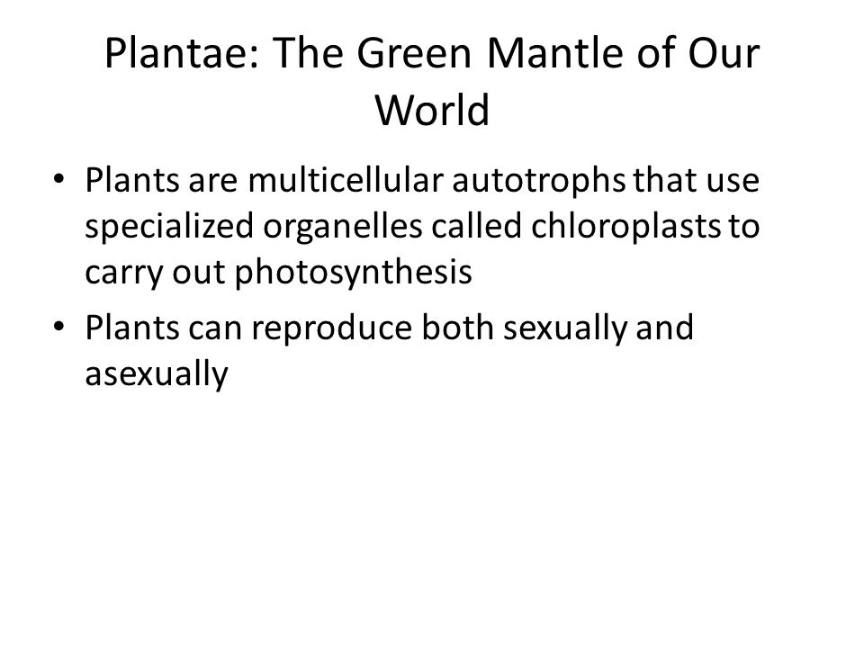 Plantae: The Green Mantle of Our World