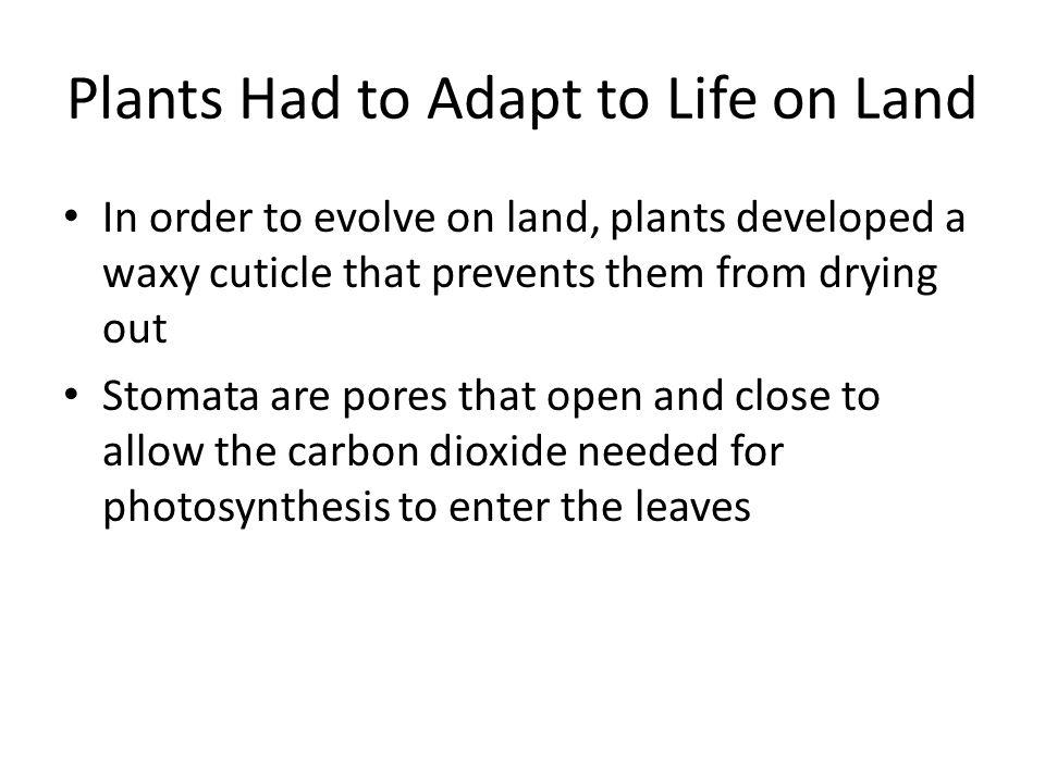 Plants Had to Adapt to Life on Land