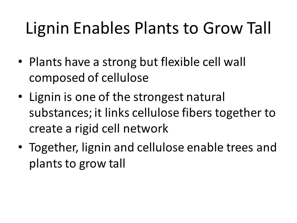 Lignin Enables Plants to Grow Tall