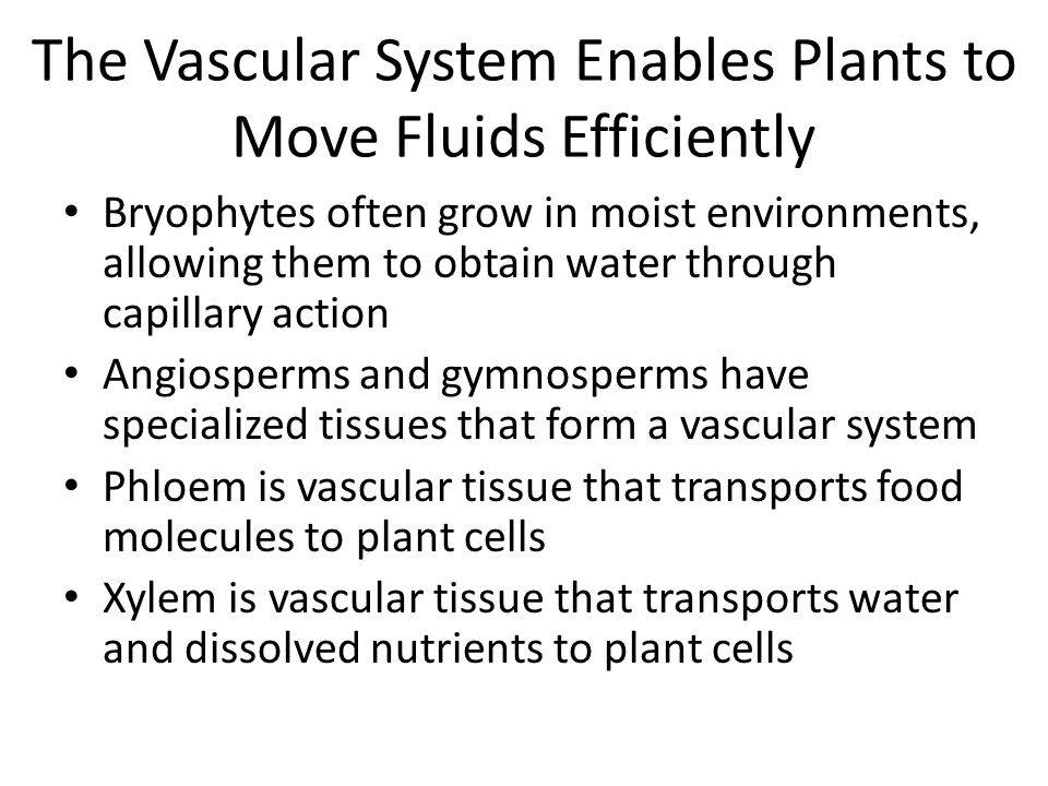 The Vascular System Enables Plants to Move Fluids Efficiently