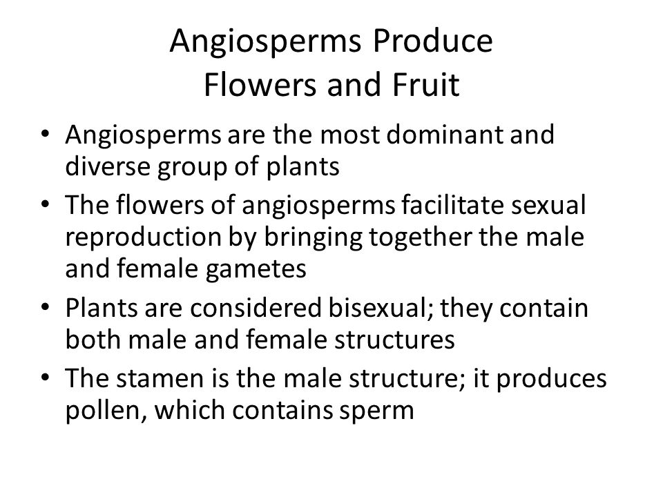 Angiosperms Produce Flowers and Fruit